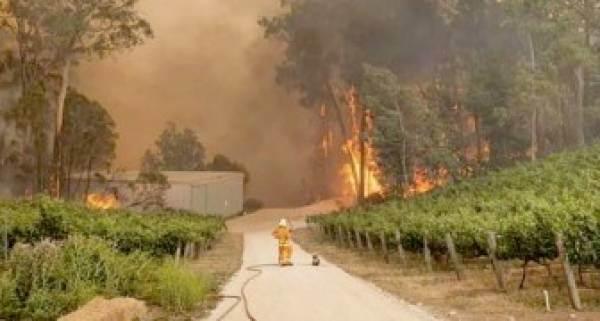 Un'asta di grandi vini per l'Australia devastata dagli incendi