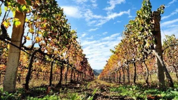La filiera vitivinicola chiede misure più adeguate per la promozione nei mercati esteri