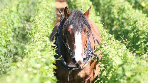 A cavallo sulla strada del Durello