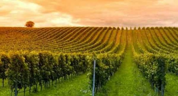 La filiera del vino: bene le semplificazioni votate in Parlamento