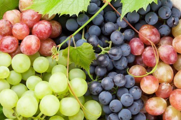 Sulle etichette del vino europeo torna l'origine delle uve