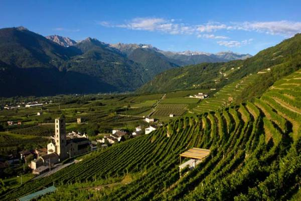 Nuova Pac: le richieste di 10 Paesi (Francia capofila) per il settore vinicolo