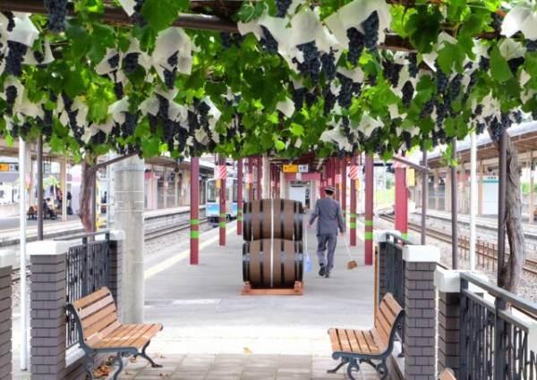 Giappone: esce il primo vino da uve coltivate in una stazione ferroviaria