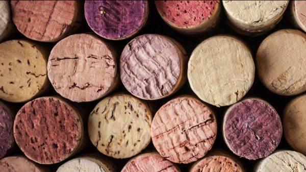 Ribolla Gialla, Aglianico, Lagrein e Verdicchio i vitigni autoctoni più cercati in rete