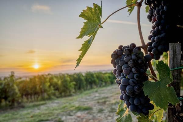 Nascono gli itinerari gourmet che uniscono Toscana e Piemonte