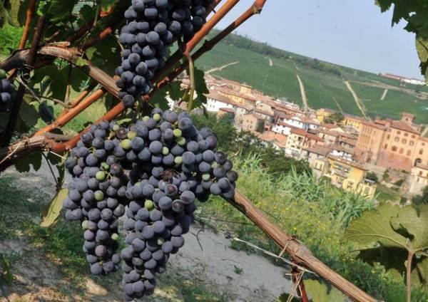 Accordo Intesa Sanpaolo e Consorzio Barolo per facilitare il credito