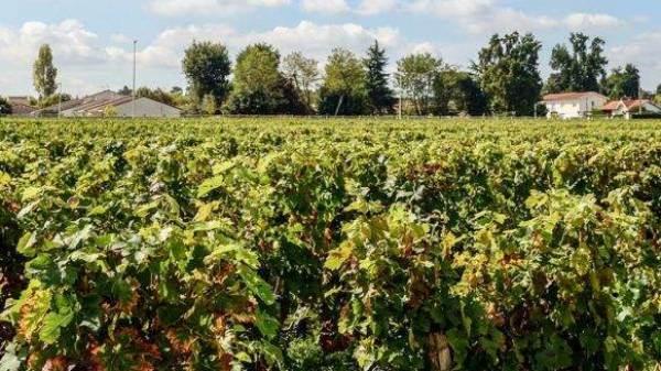Droni, bottiglie edibili o vending machine, cosa c'è nel futuro del vino?