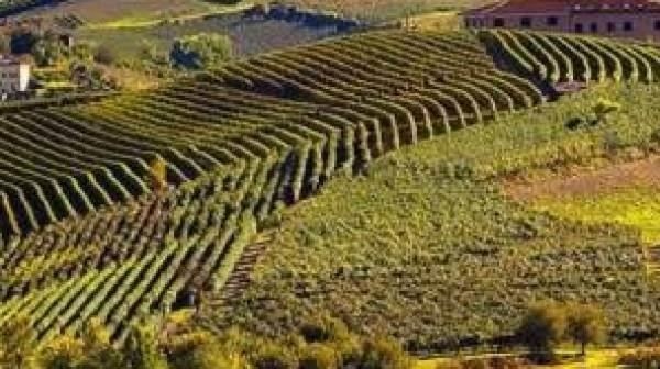 Le tecnologie del Politecnico di Torino al servizio delle produzione viticole del Piemonte