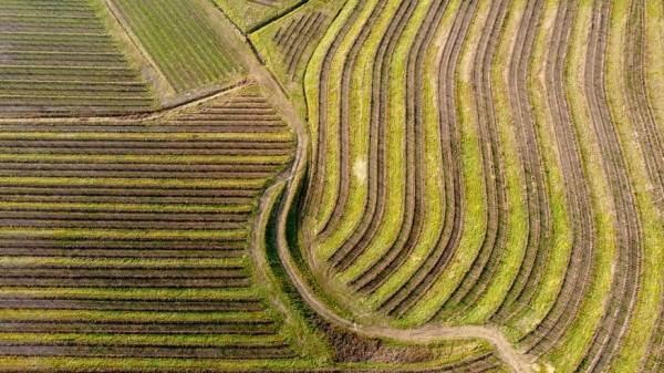 Agricoltura 5.0: Ismea mette in vendita oltre 16mila ettari di terreni agricoli