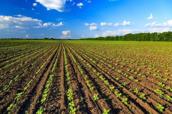 Bando da 4,2 milioni per la ricerca in agricoltura biologica