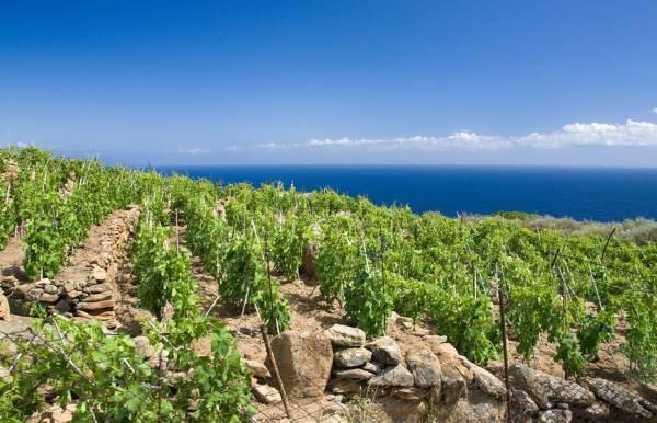 La Maremma Toscana è la terza Doc più grande della Regione