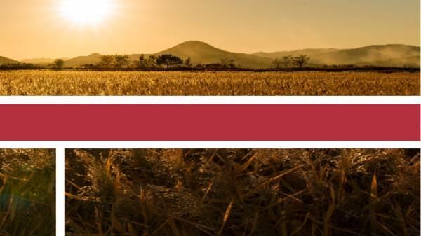 Il turismo enogastronomico post-Covid: Sicilia ed Emilia Romagna le mete più ambite