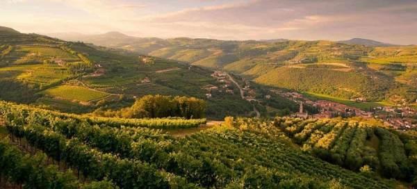 """Due aree vitivinicole tra i 5 nuovi siti """"Paesaggio rurale storico"""""""
