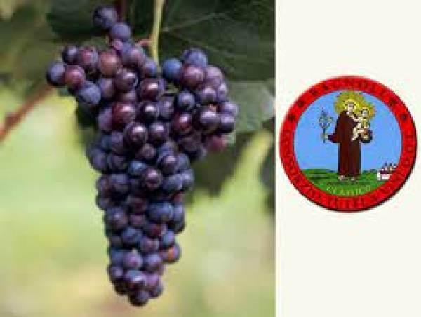 Riconoscimento per il Consorzio di tutela vino Friularo di Bagnoli DOCG e vini DOC Bagnoli