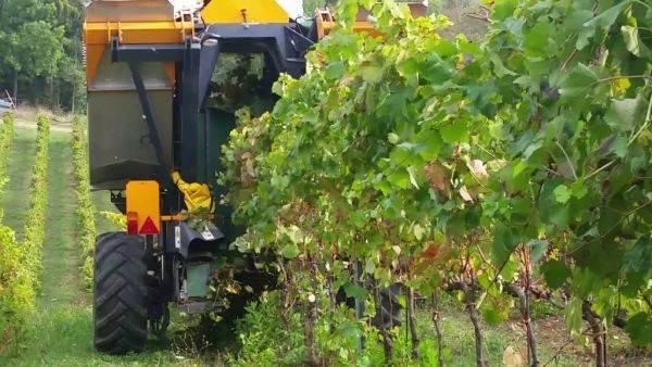 Investimenti nella filiera agroalimentare: domande a Ismea per 338 milioni di euro