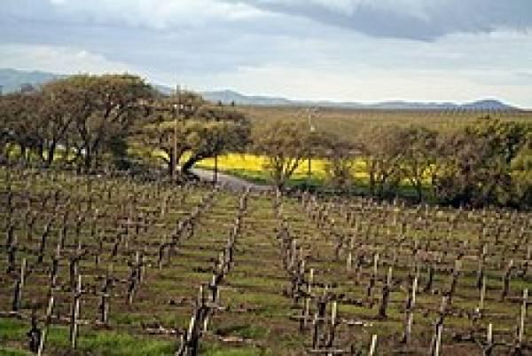 United States: Viticulturists on impacts of climate change on wine country