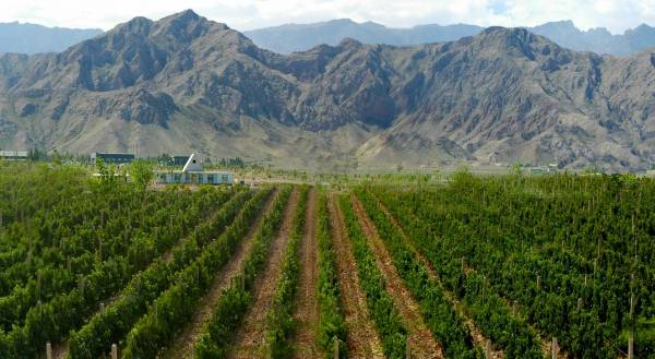 Cina: approvato un piano di sviluppo del vino di 15 anni per la regione di Ningxia