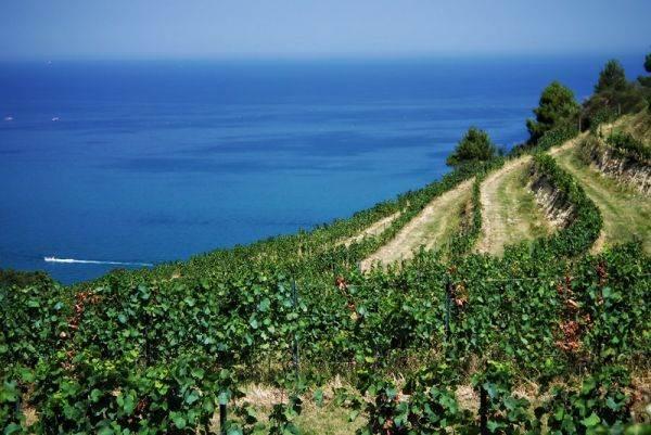 Sardegna da scoprire con la via del Cannonau