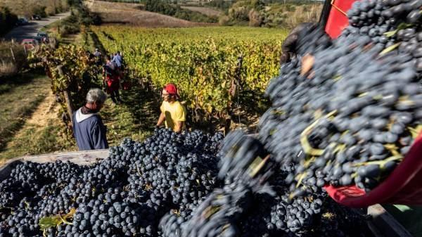 Vino e wine destination decisivi per la ripresa del turismo italiano