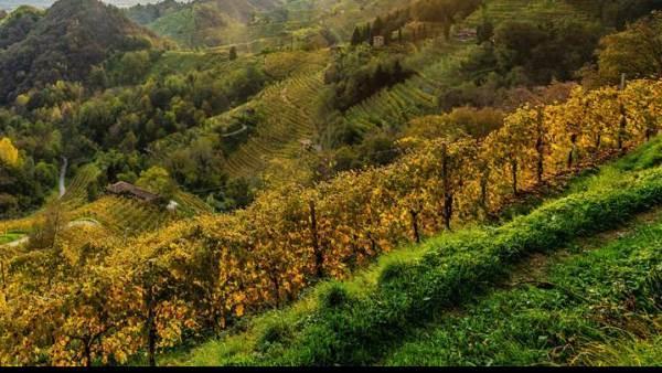 Un tour tra le grandi denominazioni del vino toscane
