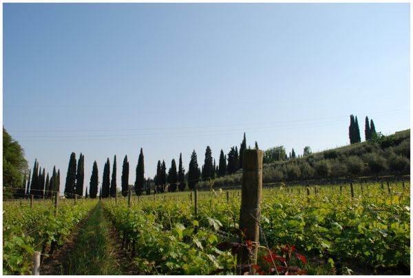 Veneto: prorogati i termini per il Bando per il settore vitivinicolo