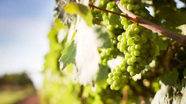 Consorzio Vini Alto Adige: nuove piattaforme social per parlare direttamente ai consumatori