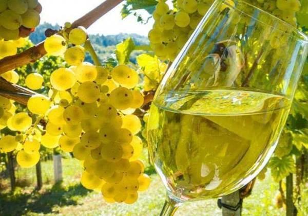 Cresce a 95 milioni il numero di bottiglie prodotte dalla Doc Sicilia nel 2019