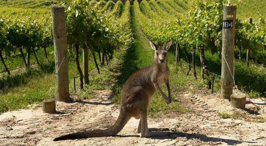 Australia: establishing label directory to protect wine industry