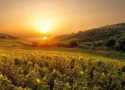 Bilancia agroalimentare italiana: svolta positiva nel 2020 (+2,6 miliardi)